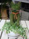 楽天癒し空間 One's Garden&Plantsアニマルトピアリーモス♪動物シリーズ♪猫(ネコ)さん ニャンニャン♪Sサイズ斑入りフィカスプミラを植え付けています♪陶器鉢植え・受け皿付き 場所取らずでちょこっと置くだけ♪誕生日やお祝い・プレゼントや景品にも♪