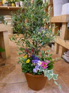 人気のオリーブの木と季節のおまかせ寄せ植え♪コンテ