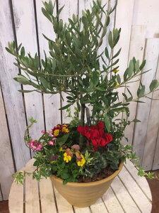 人気のオリーブの木と季節の寄せ植え コンテナガーデ