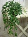 楽天癒し空間 One's Garden&Plantsシッサスシュガーバイン 3号 自分流の室内空間に植え替えして仕上げて下さい♪アジアンチックやモダン風・トロピカル風のインテリア寄せ植えなどにも♪