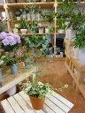 【楽ギフ_包装】【楽ギフ_メッセ入力】ユーカリの木を育てたいお客様に♪プレゼントにも♪シンプル寄せ植え仕立て♪コンテナガーデン 記念樹に♪