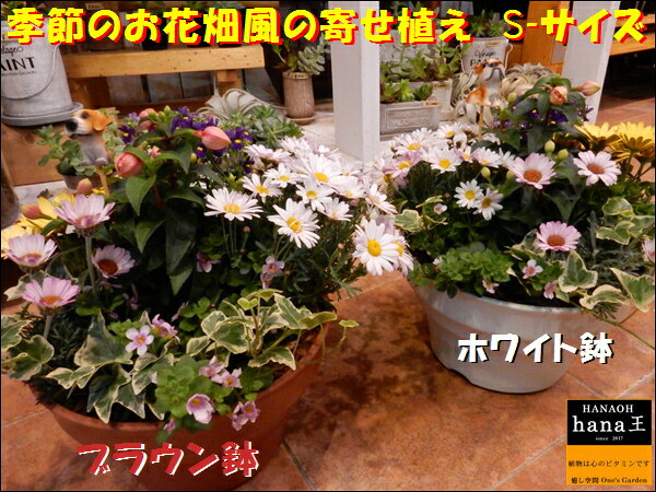 季節の寄せ植えシリーズ お花畑♪旬のお花たちを使用してデザイナーおまかせで作成致します♪S-サイズプラスチック製で軽量化 鉢カラーをお選びください♪おまかせピック付き♪【楽ギフ_メッセ入力】【送料無料】ギフト特集