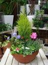 冬から春の季節のおまかせ寄せ植え♪コニファーゴール