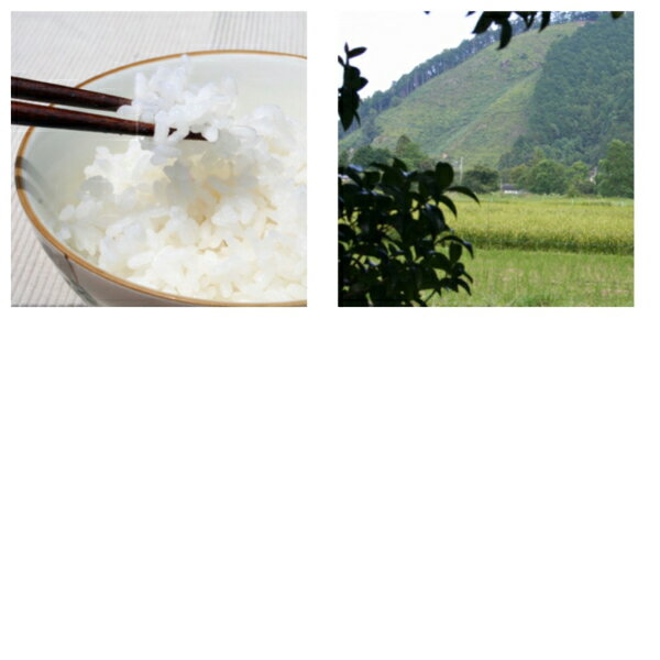山形県産特別栽培米特A つや姫【30年産】 10kg[5kg×2袋](送料無料)