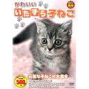 DVD かわいいいたずら子ねこ CCP-8008 子猫 猫 撮りおろしかわいい動物シリーズ どうぶつ ペット ホビー 癒し 動画 映像 肉球 生態 可愛い キャット