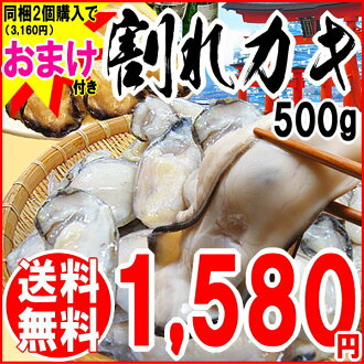 Included 2 pieces purchased (3,160 yen) in as an extra Oyster translation / oysters / ware crack oysters / Hiroshima Prefecture industrial refrigeration Oyster 500 g Hiroshima from Oyster / mean / wake / pot set / seafood *-enabled and non-gift, 2 days a