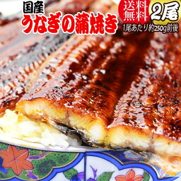 <strong>うなぎ</strong> 蒲焼き 国内産 送料無料 ギフト 土用の丑の日 お歳暮 ギフト 国産 <strong>うなぎ</strong> 鰻 贈り物 国産 特大 2尾(1尾約230g前後〜250g前後) 鰻 <strong>うなぎ</strong>蒲焼き 土用の丑 オリジナル レシピ付き