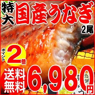 Gift Japanese eel Kabayaki eel eel Kabayaki Super oversized 2 tail into Kagoshima Prefecture production * Kabayaki sauce with birthday 内 祝 I celebrate unagi / sales %