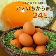 ぶんご活きいき卵アスのちから赤玉 6個入り×4パック(24個セット) 大分ファーム/農場HACCP認証農場【送料無料】【敬老の日ギフトクーポン】