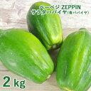 【たっぷりおまけ付き】シャキシャキ食感 ZEPPINサラダパパイヤ 2kg(3〜4個) 青パパイヤ パパイン酵素 無農薬 ベーベジ【送料無料】