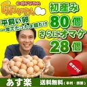 今が旬!平飼い卵の初産み卵80個+破損保証のおまけ28個(卵...