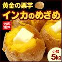 プチインカのめざめ(5kg)北海道産 じゃがいも ジャガイモ じゃが芋 送料無料