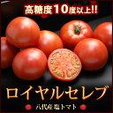 塩トマト ロイヤルセレブ(約900g)熊本県八代産 とまと フルーツトマト 糖度10度以上 送料無料