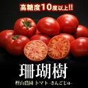珊瑚樹トマト(約1kg)徳島産 フルーツトマト 糖度10度以上 高糖度 送料無料