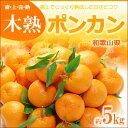 木熟葉付きポンカン(約5kg)和歌山産 みかん 柑橘 ぽんかん 椪柑 送料無料