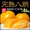 由良八朔(約4.5kg)和歌山産 はっさく ハッサク ゆら 柑橘 完熟 送料無料