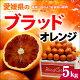ブラッドオレンジ(L-2L/約5kg)愛媛産 秀品 タロッコ 送料無料