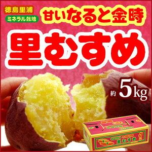 ミネラル サツマイモ さつま芋
