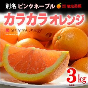 オレンジ アメリカ ネーブル