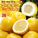 ゴールデンオロブロンコ(32-40玉/約12kg)カリフォルニア産 グレープフルーツ 食品 フルーツ 果物 グレープフルーツ 高糖度 送料無料