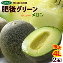 肥後グリーンメロン 4L×2玉(約4kg)熊本産 大玉限定 青肉メロン 送料無料