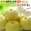 新種の青梨インパクト世紀 なつひめ梨(約2kg)鳥取産 糖度...