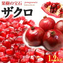 ザクロ(3-4玉/1.2kg前後)アメリカ産 ざくろ 柘榴 石榴 青果 食品 フルーツ 果物 ザクロ 送料無料
