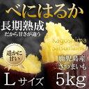 【送料無料】べにはるか 5kg Lサイズ...