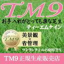 芝生 TM9 1平米 鹿児島産 高麗芝 手入れが楽 簡単で見た目もキレイな芝生 楽天市場芝