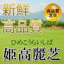 芝生!姫高麗芝 1平米 高品質・新鮮 葉が細く密生度が高い芝生 やっぱり人工芝より天然芝! ガーデニ