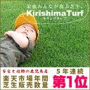 芝生!キリシマターフ(当店限定品種・日本芝) 1平米 手入れが楽・簡単な芝生葉が短いから刈り込みの回数が減って、芝生の手入れが楽になる、あったらいいなを実現した逸品。濃緑の葉が心を癒す。当店限定品種