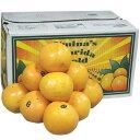 【箱売り】グレープフルーツ ルビー 36玉〜48玉 フロリダ 南アフリカ オーストラリア 【業務用 大量販売】【RCP】
