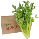 セロリ 1箱(5〜10株入り) 長野産・熊本・福岡産(時期により産地が変わります。)