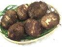 九州産 里芋(さといも・サトイモ)1kg  九州の安心・安全な野菜! 【九州・宮崎産・熊本産・大分産