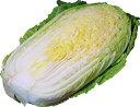 白菜【ハクサイ・はくさい】 1/2カット 芯の部分は細切りにしてサラダで! 【長野、北海道】