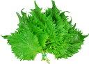 九州産 大葉 (おおば・青ジソ・しそ・シソ) 1把(10枚) 九州の安心・安全な野菜! 【九州・大分産】