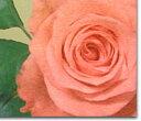 ◆お好きな本数でバラの花束【楽ギフ_包装選択】【楽ギフ_メッセ】【楽ギフ_メッセ入力】