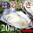 生産直送【送料無料】広島産殻付き牡蠣(かき)【20個入り】【smtb-kd】【楽ギフ_のし】