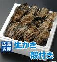 【送料無料】広島生かき 殻付き牡蠣(かき)【20個入り!】【smtb-kd】10P28Mar12