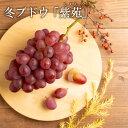 【 産地直送 】 岡山県産 冬ぶどう 「紫苑」(1房 750...