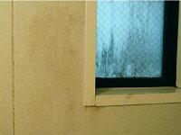 業者おすすめ,カビ取り洗剤,業務用かび取りジェル,カビ取りスプレー,ハイターで落ちない,かびとりいっぱつ,壁,畳,洗濯機,浴室,布,フローリング,マットカーテン,布団のカビ落とし,カビとり剤ランキング