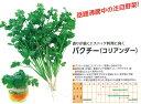 【ハーブ】コリアンダー(パクチー)〔武蔵野種苗〕/小袋