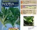 【世界の珍しい野菜】アイスプラント プチサラ〔武蔵野種苗園〕/コート小袋