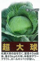【キャベツ】超大球〔トキタ〕/小袋