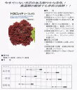 【レタス】リーフレタス トロピレッド〔固定種0055〕/ペレット小袋