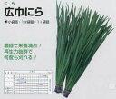 【ニラ】広巾にら〔固定種〕/小袋