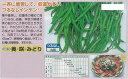 【つるなし菜豆(インゲン)】美咲みどり〔タキイ育成〕/小袋