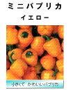 【世界の果菜】ミニパプリカ イエロー/小袋