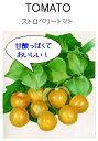 【世界の果菜】ストロベリートマト(食用ホオズキトマト)/小袋