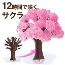 【メール便】マジック桜 Magic桜 12時